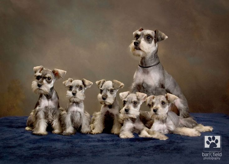 Sophie and her babies. All luck, no PhotoShop.What an adorable picture