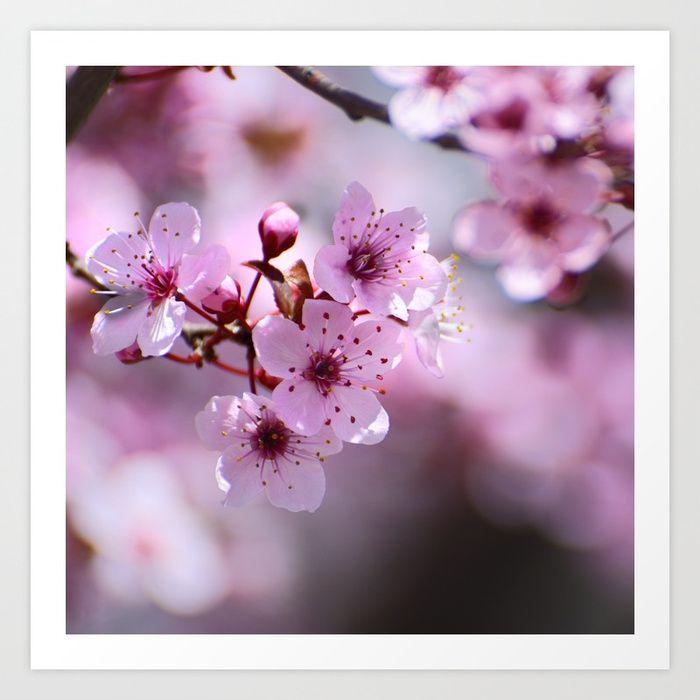 Cherry Blossoms Utah Has Wonderful Fruit Orchards In The Willard Perry Pleasant View Areas Sure There Are Ev Utah Photography Utah Salt Lake City Utah