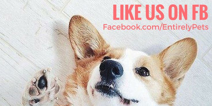 Does your #dog or #cat need new swag? Like us on Facebook for #free giveaways, photo contests, and funny pet videos! https://www.facebook.com/EntirelyPets/