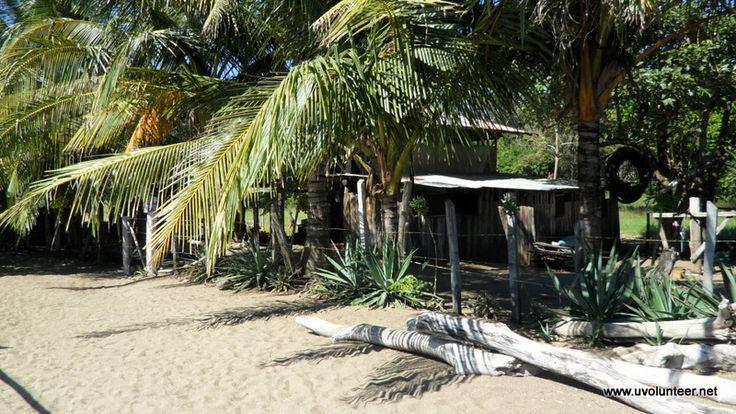 Sea turtle conservation project, Costa Rica. Volunteer opportunities, volunteer overseas. https://www.uvolunteer.net/