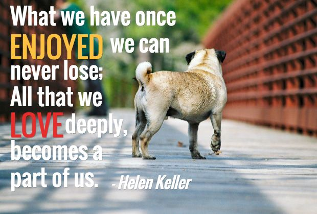 quote death of a dog | 13 Loss of a Dog Quotes: Comforting Words After Losing a Dog
