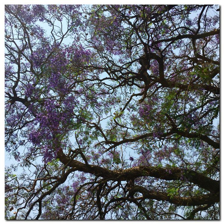 #goodinJoburg #jacaranda skies