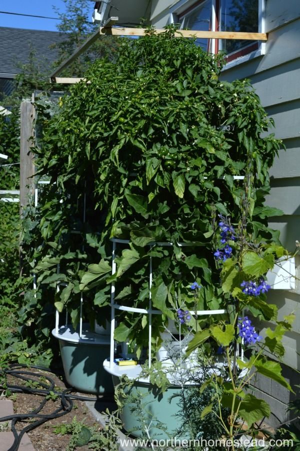 Growing The Tower Garden In Cold Climate