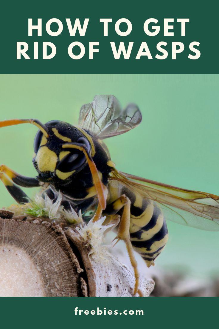 How to get rid of wasps get rid of wasps how to get rid