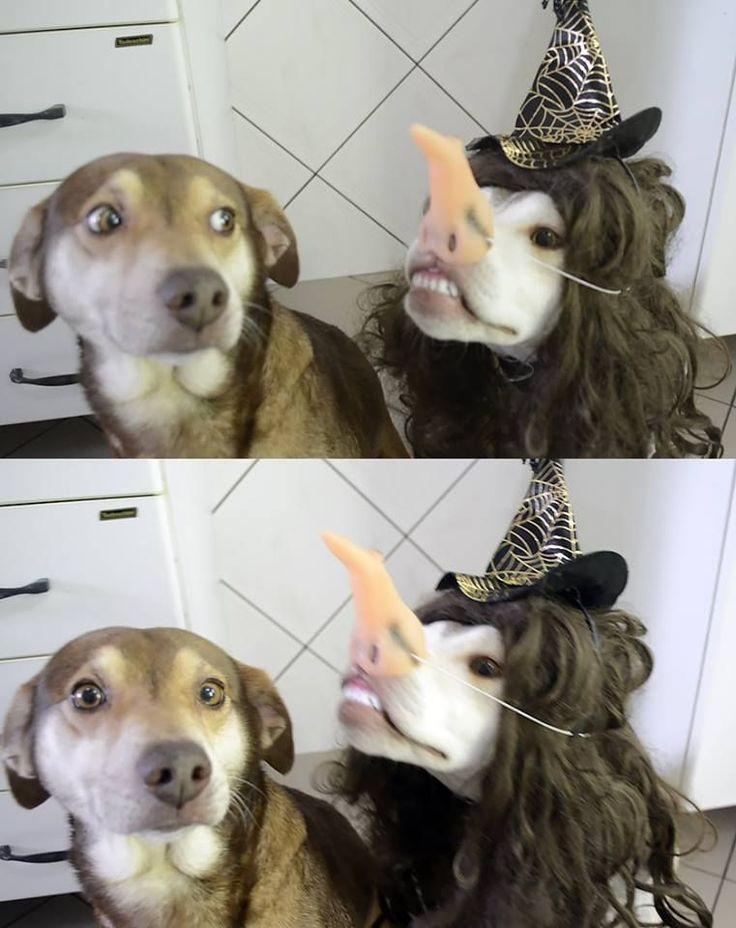 Halloween be like