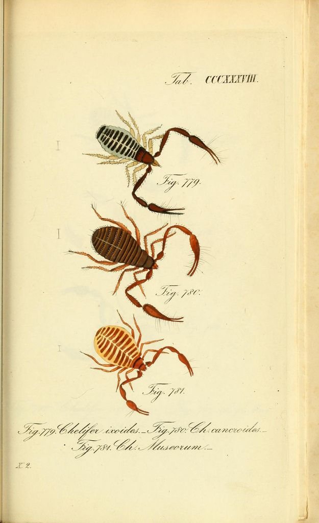 https://www.flickr.com/photos/biodivlibrary/8560517296/sizes/l
