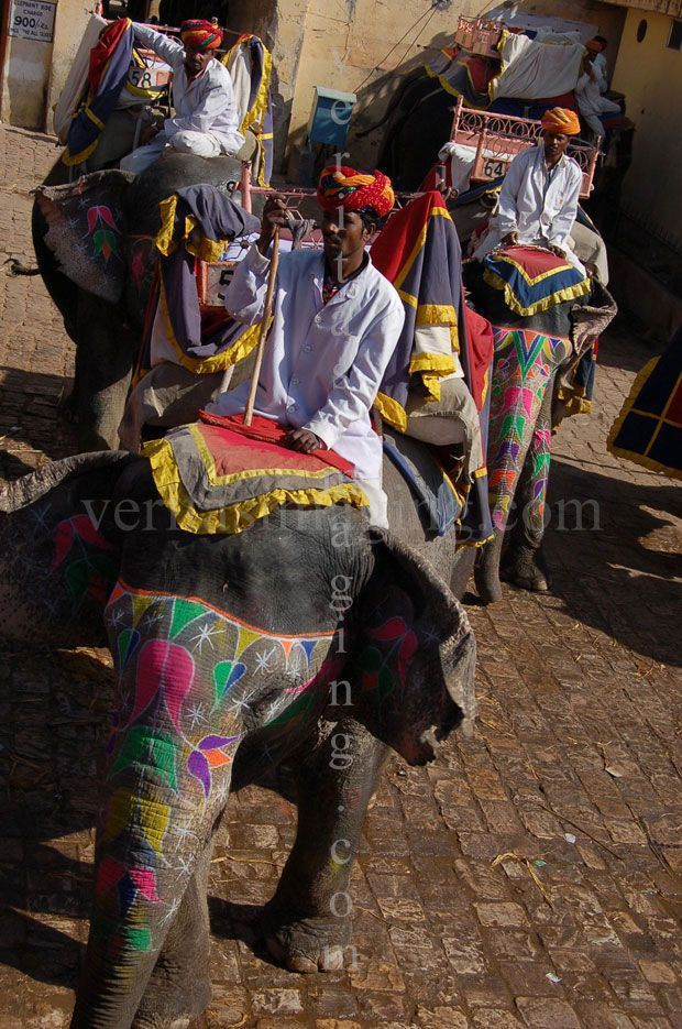 elephants-mahout-drivers-Amber fort-Rajasthan