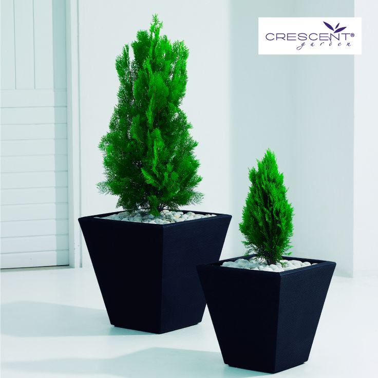 Add a top layer of white stones to your evergreen planting to create your own winter wonderland look, not matter what climate you live in. See our Gramercy Square Planters here: https://goo.gl/tX87jB