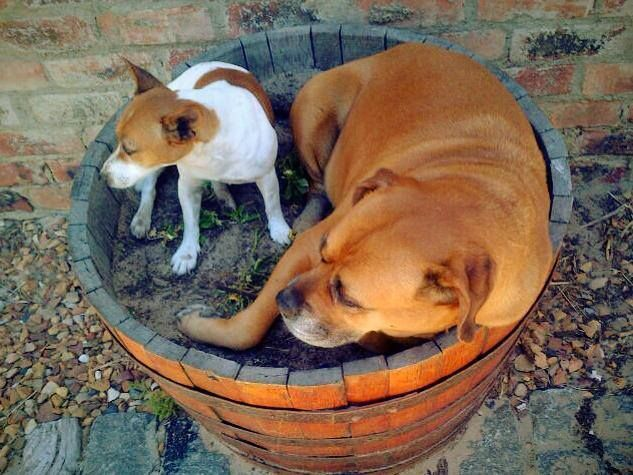 Lili and Toto relaxing in a flower barrel