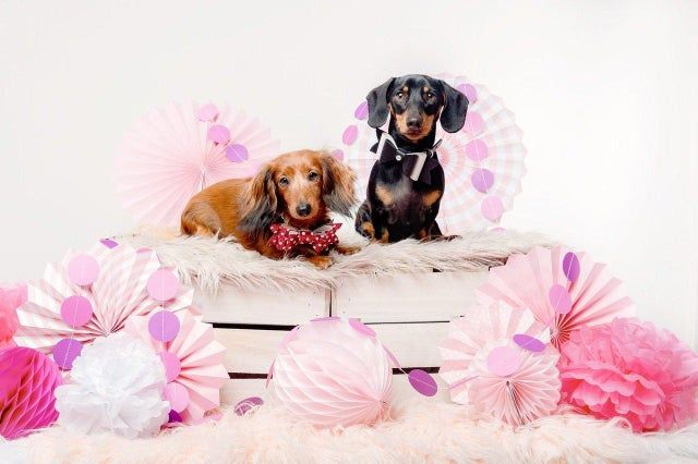 East Hants Dachshunds Will Be Hosting Its Next Event On February