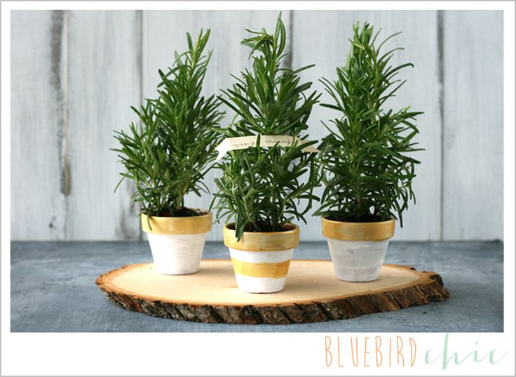 fifteen minute DIY gift idea – rosemary trees - bluebird chic