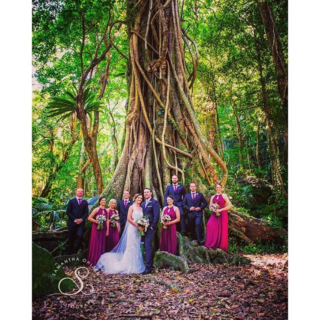 This amazing fig tree can be found at #mountkiera #scoutcamp near #Wollongong. If you plan on having a #wollongongwedding you should check this place out for an amazing #weddingceremony location. Not only is there 2 great locations here to have a #rainfor