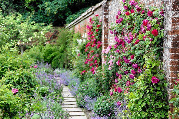 róże angielskie ogród angielski