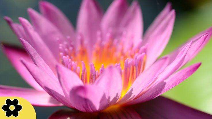 Méditation, Musique de zen, Chakra, Musique Relaxante pour le Soulagemen...