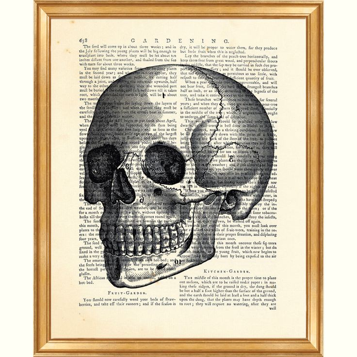 17 best Anatomy Prints images on Pinterest