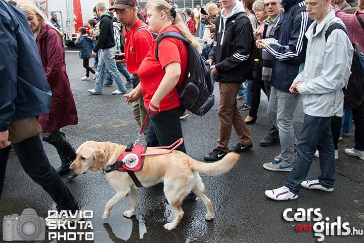 Boxutca felé vezet a vakvezető kutya :)