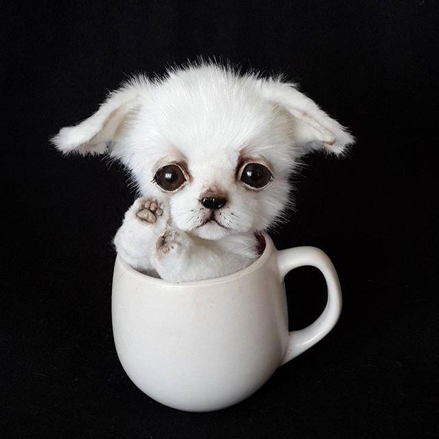 WEBSTA @ va.kulina - Смешной #щенок #чихуахуа  #домнашел #тедди #собака #собачка #чих #teddy #teddybear #dog #puppy #puppylove #chihuahua #lovemyjob #vakulina