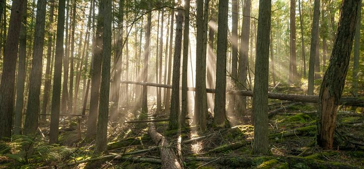 """Legislation News: H.R.5860 - Emergency Forest Restoration Act  H.R.5860 - Emergency Forest Restoration Act was introduced in the House on July 14th, 2016 by Representative Tom McClintock(R-CA).  The purpose of this bill is, """"To make a categorical exclusion available to the Secretary of Agriculture and the Secretary of the Interior to develop and carry out a forest management activity..  Full post at: http://the4thbranch.tumblr.com/"""