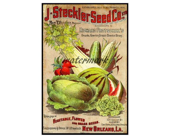 """Antique Seed Catalog Print, 1896, 5"""" x 7"""" Wall Art, Vintage Vegetable Garden, DIY, Home Decorating,  Old Time Catalogue Accent, Print 2"""