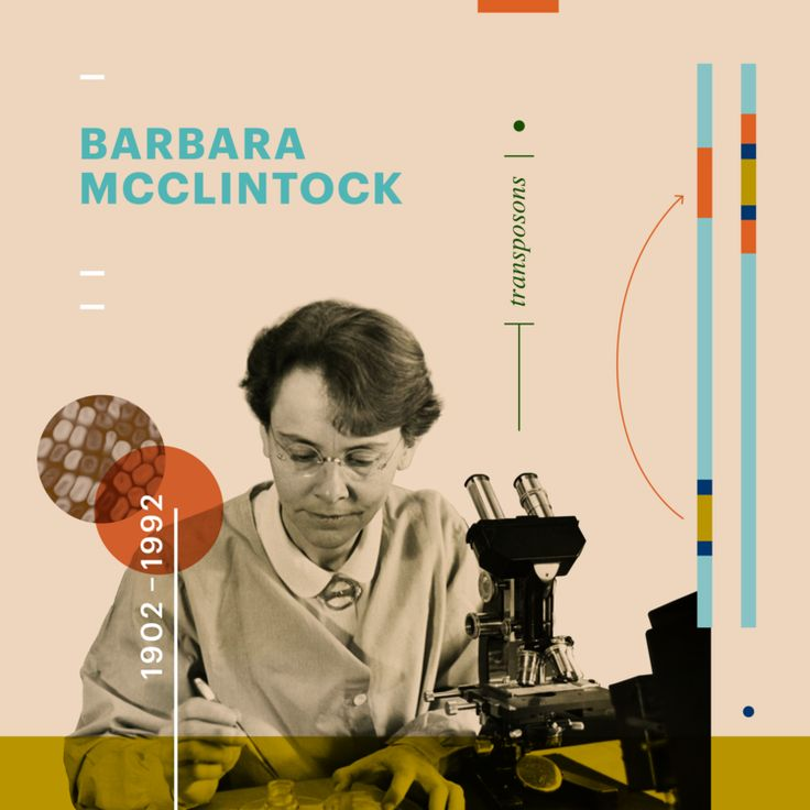 During the 1940s and 1950s, Barbara McClintock discovered transposition and used it to demonstrate that genes are responsible for turning physical characteristics on and off. She developed theories to explain the suppression and expression of genetic information from one generation of maize plants to the next. Poster design: Amanda Phingbodhipakkiya