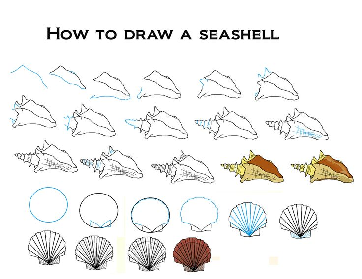 how to draw seashells drawing pinterest seashells