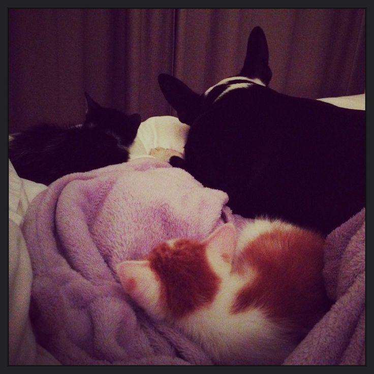 First night sharing a bed. Myagi, Bogie and Fudge.