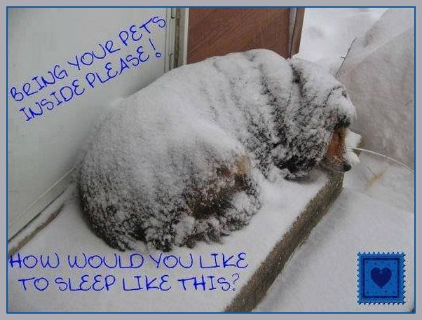 If you see a dog left out in the cold -REPORT IT -Owners MUST provide shelter for their pets! We must be their voice -so REPORT animal abuse/neglect! --Posted to DESERT HEARTS Animal Compassion -  Phoenix, Arizona --12/4/2013 https://www.facebook.com/desertheartsphoenix. via I.C.A.R.E. Network