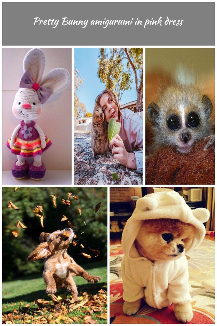 Pretty bunny – free crochet pattern cutest animals Pretty Bunny amigurumi in pin…