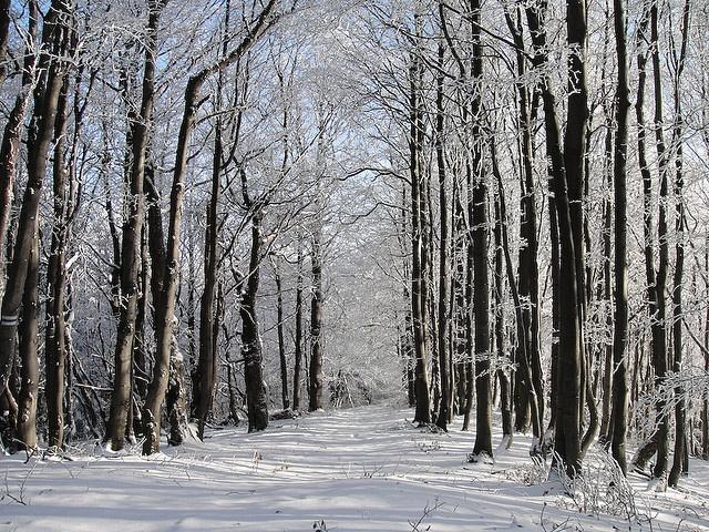 Polish winter  Bieszczady Mountains  Poland/Slovakia Border