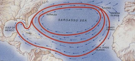 Sea Turtle Migration and Navigation! Animal Adaptations