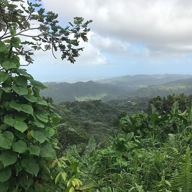 #elyunquerainforest #puertorico #regnskog