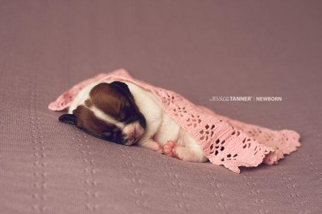 Newborn puppy photography jessica tanner photography atlanta ga www jessicatannerphotography com www facebook
