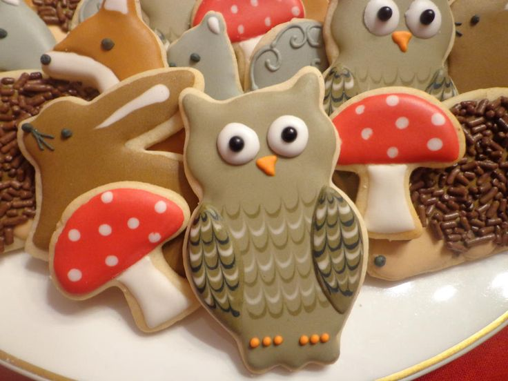 Wise owl | Cookie Connection