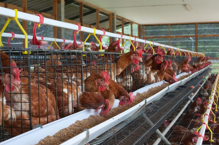 The Business Research Company's Poultry Manufacturing