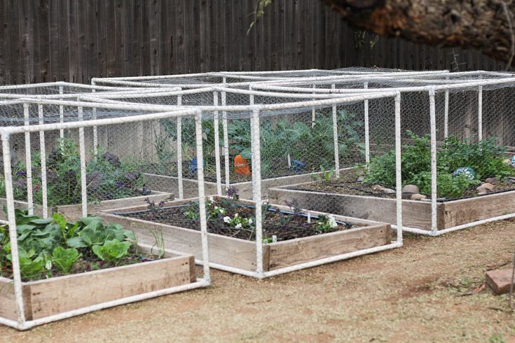pvc pipe + hardware cloth to make raised garden beds cat/bird proof - also good design for rabbit tractor