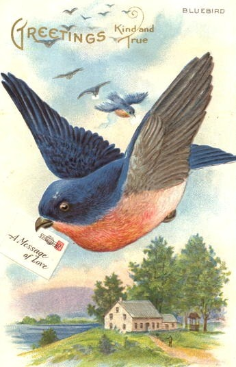 115 best bluebird of happiness images on pinterest little birds bluebird greetings kind and true mailed 1912 embossed old postcard m4hsunfo Image collections