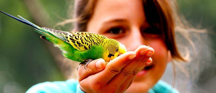 Choosing a Bird Breed: Birds come in all shapes, sizes and colors. We cover the questions that will help you choose the right bird for your family and lifestyle. #pets #birds #beloved