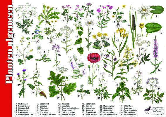 Herkenningskaart / zoekkaart Planten