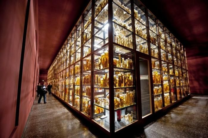 Berlin's  Natural History Museum has opened its exhibition of jars containing fish, mammals, worms, crabs, spiders and reptiles preserved in alcohol. Some of the animals are 200 years old.
