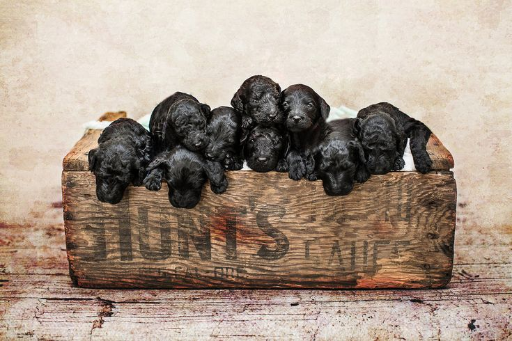 And this is his family's set of newborn puppies. | This Might Just Be The Ultimate Newborn Photo Shoot