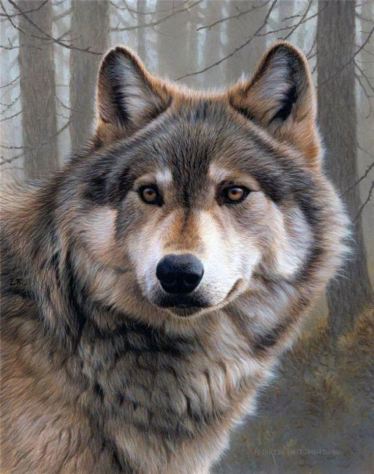 Картинки волков, днем рождения