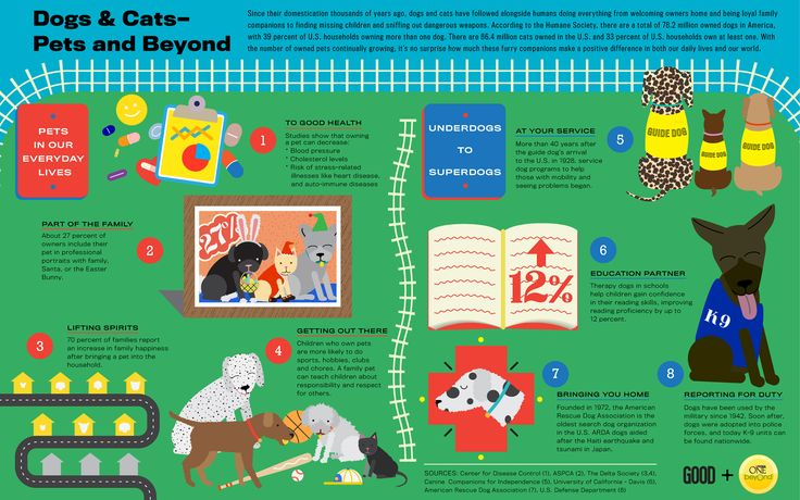 Dogs and Cats - Pets and Beyond