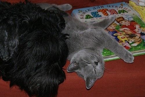 Tired little animals