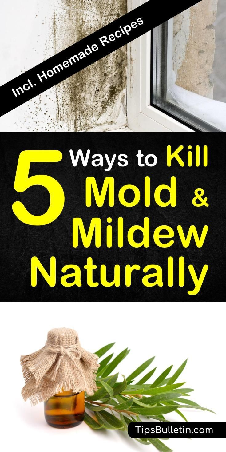 5 Ways To Kill Mold And Mildew Naturally | Cleaning Ideas ...