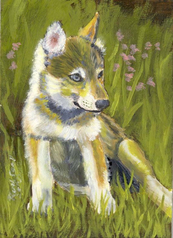 The gallery for --> Rare Colored Wolves
