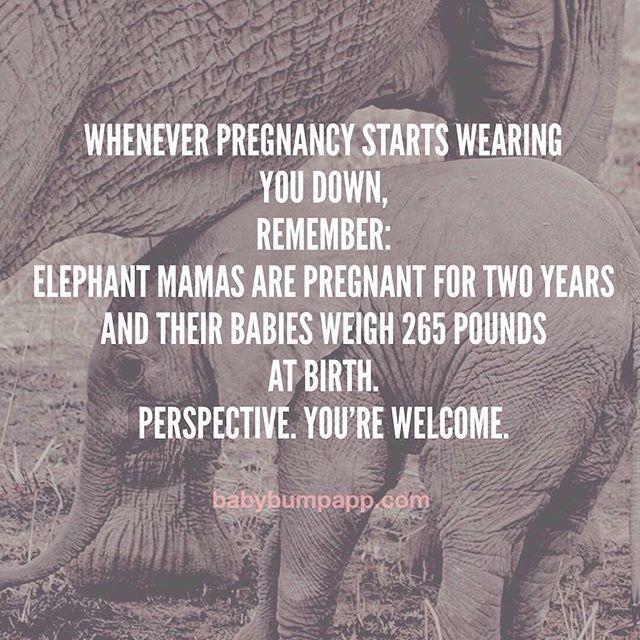 Hahaha! Makes any pregnant woman feel better!
