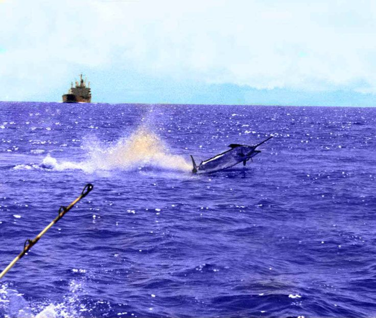 17 best images about big game fishing on pinterest deep for Tuna fishing games