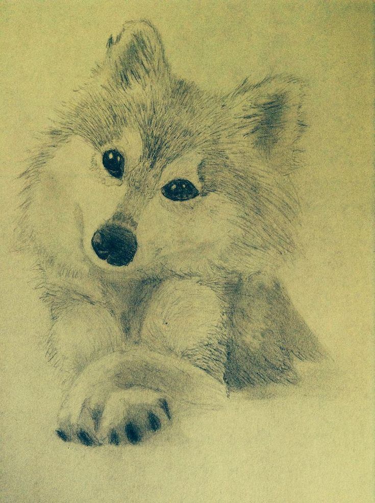 Best 25 Cute Wolf Drawings Ideas On Pinterest How To