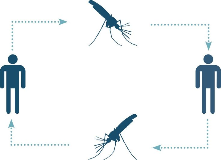 Malaria cycle involving mosquitoes and humans. How you Can Prevent Infection.