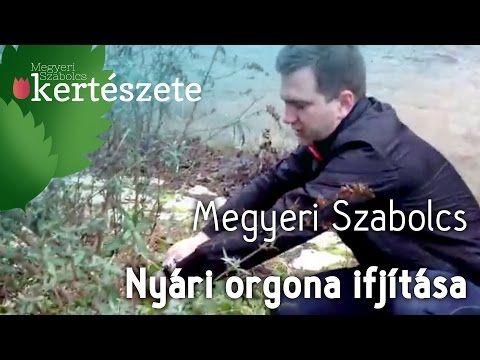Buddleia - Nyári orgona ifjítása -  metszése - Megyeri Szabolcs Kertészete - YouTube